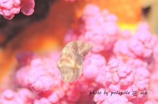 f:id:polepole-at-sea:20160825200030j:plain
