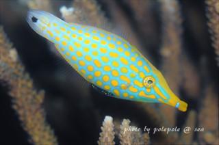 f:id:polepole-at-sea:20160924213615j:plain