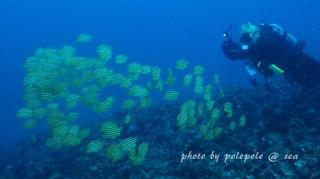 f:id:polepole-at-sea:20161005004609j:plain
