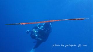 f:id:polepole-at-sea:20161005004729j:plain