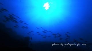 f:id:polepole-at-sea:20161010231229j:plain
