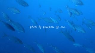 f:id:polepole-at-sea:20161013141211j:plain
