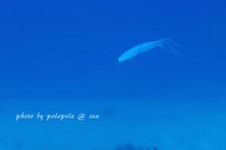 f:id:polepole-at-sea:20161101231309j:plain