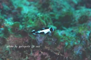 f:id:polepole-at-sea:20161101231346j:plain