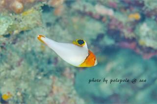 f:id:polepole-at-sea:20161101231447j:plain