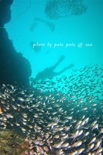 f:id:polepole-at-sea:20161117233959j:plain