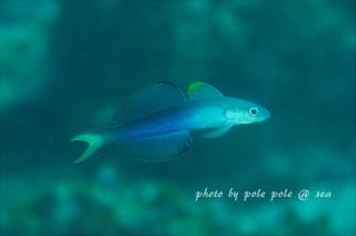 f:id:polepole-at-sea:20161203214237j:plain