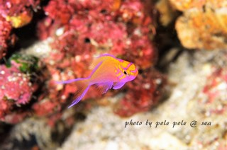 f:id:polepole-at-sea:20161204183335j:plain