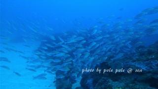 f:id:polepole-at-sea:20170122182621j:plain