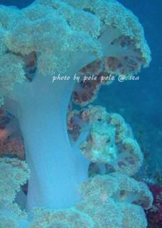 f:id:polepole-at-sea:20170320175558j:plain