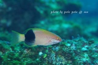 f:id:polepole-at-sea:20170326200721j:plain