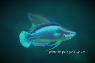 f:id:polepole-at-sea:20170514202839j:plain
