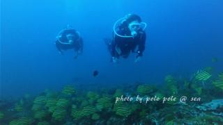 f:id:polepole-at-sea:20170522123424j:plain
