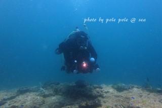f:id:polepole-at-sea:20170528232951j:plain
