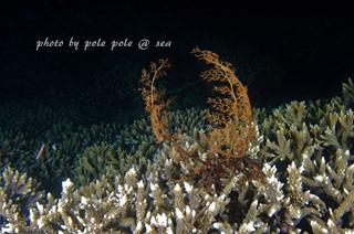 f:id:polepole-at-sea:20170612231642j:plain