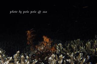 f:id:polepole-at-sea:20170612231742j:plain
