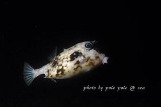 f:id:polepole-at-sea:20170612232215j:plain