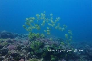f:id:polepole-at-sea:20170618233339j:plain