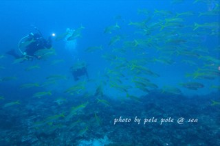 f:id:polepole-at-sea:20170701235859j:plain
