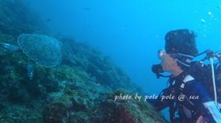 f:id:polepole-at-sea:20170711013019j:plain