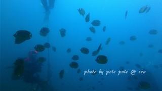 f:id:polepole-at-sea:20170717220711j:plain