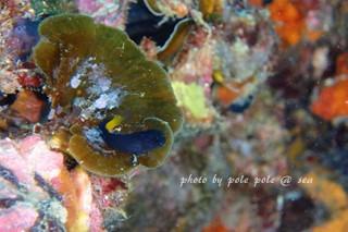 f:id:polepole-at-sea:20170829190210j:plain