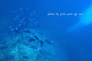 f:id:polepole-at-sea:20170901221152j:plain