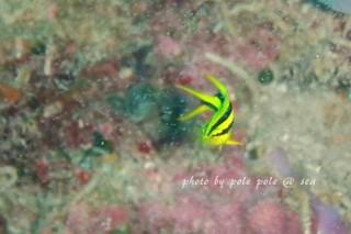 f:id:polepole-at-sea:20170902215443j:plain