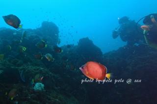 f:id:polepole-at-sea:20170909224330j:plain