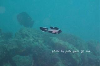 f:id:polepole-at-sea:20170919231413j:plain