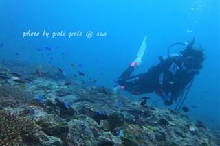 f:id:polepole-at-sea:20170923215802j:plain