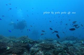 f:id:polepole-at-sea:20170923215948j:plain