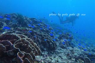 f:id:polepole-at-sea:20170924233836j:plain