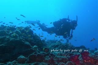 f:id:polepole-at-sea:20170925233308j:plain