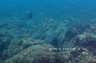 f:id:polepole-at-sea:20171001235250j:plain