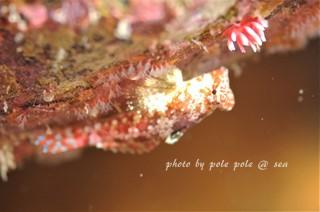 f:id:polepole-at-sea:20171007222610j:plain