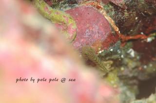 f:id:polepole-at-sea:20171007222743j:plain