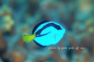 f:id:polepole-at-sea:20171007223209j:plain