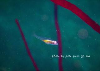 f:id:polepole-at-sea:20171009184434j:plain