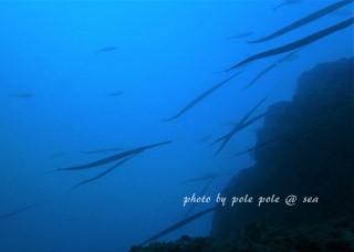 f:id:polepole-at-sea:20171009184726j:plain