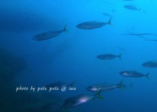f:id:polepole-at-sea:20171011234427j:plain