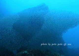 f:id:polepole-at-sea:20171013213605j:plain