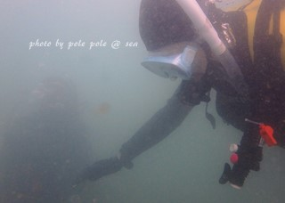 f:id:polepole-at-sea:20171024220825j:plain
