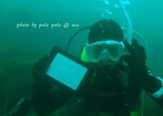 f:id:polepole-at-sea:20171025221723j:plain