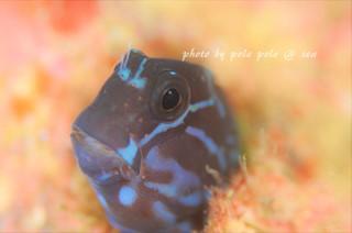 f:id:polepole-at-sea:20171027232508j:plain