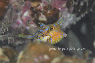 f:id:polepole-at-sea:20171027232658j:plain