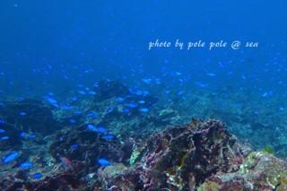 f:id:polepole-at-sea:20171103221432j:plain