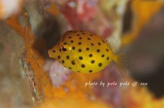 f:id:polepole-at-sea:20171114085802j:plain