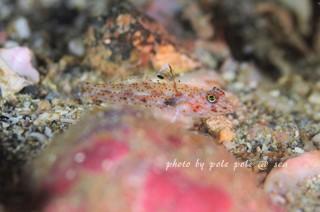 f:id:polepole-at-sea:20171114085857j:plain