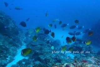 f:id:polepole-at-sea:20171123181904j:plain